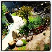 Garden detail with greywater system in the background.