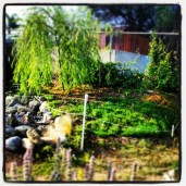 The makings of my grassy knoll
