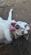 Sasha in farm bliss