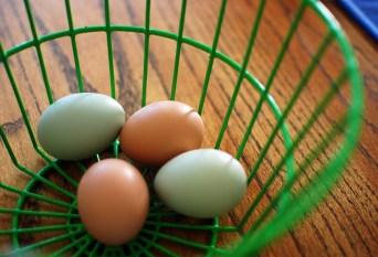 Yummy eggs!
