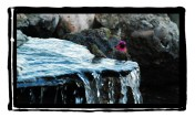 Hummingbird bathing in waterfalls