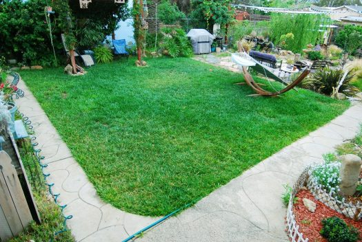 4_Bermuda Grass_Back Lawn