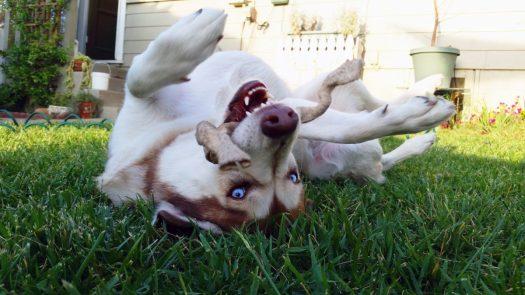 Sasha in the Grass