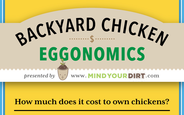 Backyard Chicken Eggonomics: How Much Does it Really Cost to Raise Chickens?