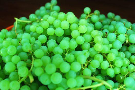 How to Make Organic Raisins 02_Niagara Grapes Detail