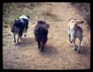 Noe, Edie and Sasha butts.