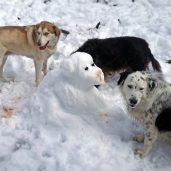A snow dog with hot chocolate flavor