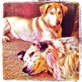 donald-trumps-hair-lives-in-my-backyard-3_sasha-and-noe