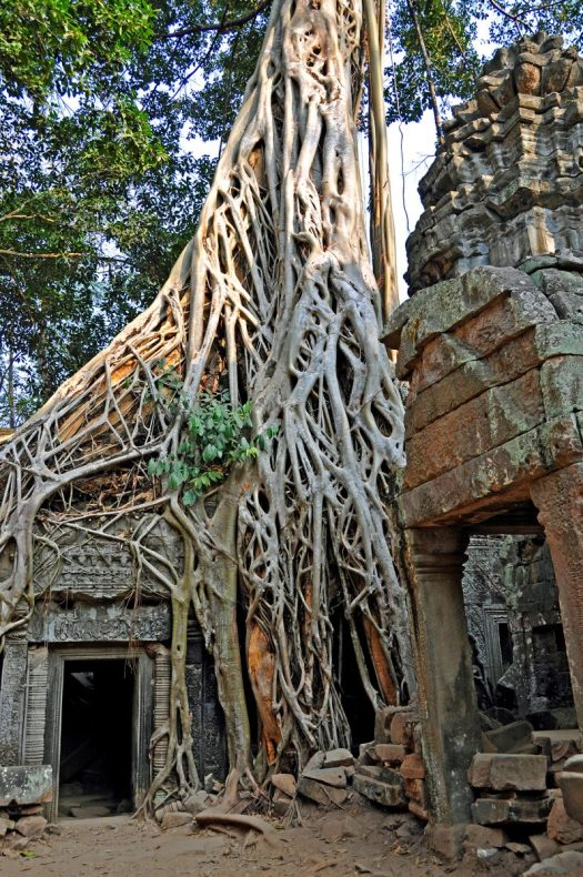 help-my-plant-is-healthy-2c_ruins_of_ta_prohm_cambodia