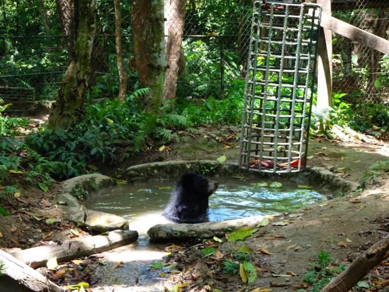 Bär im Bärenpark Luang Prabang