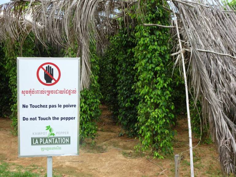 Kampot Pfeffer - La Plantation
