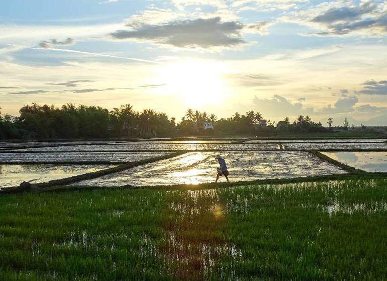 Arbeiter im Reisfeld Hoi An