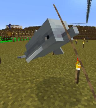 イルカを飼おう