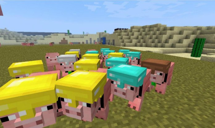 pig-companion-6