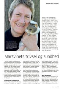 Artikel om marsvin trivsel og sundhed i Dyrefondets magasin