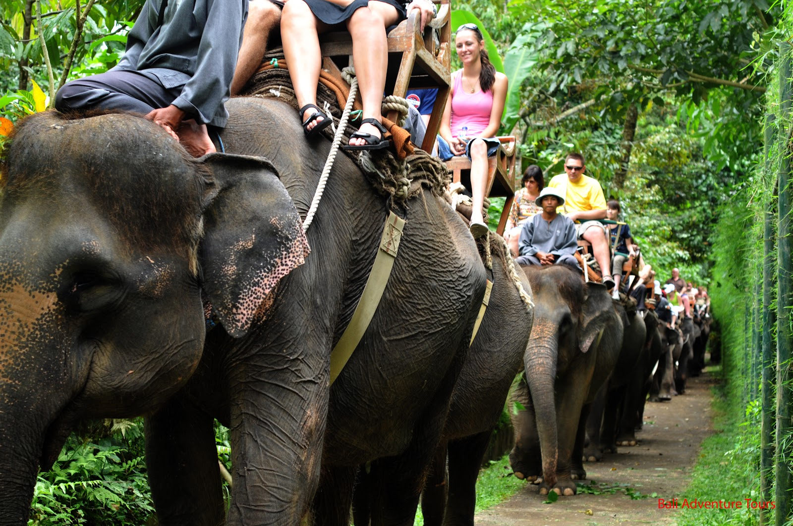 Great news: TripAdvisor stops selling tickets to many animal attractions