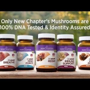 Health Benefits of Mushrooms | Supplements for Immune, Mind, Liver & More | 100% DNA-tested Strains