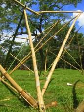 Bamboo_20120410_045