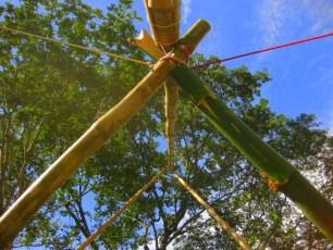 Bamboo_20120410_064