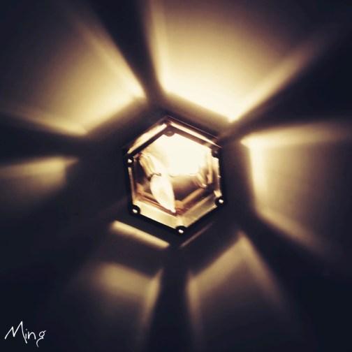 Electron Lily