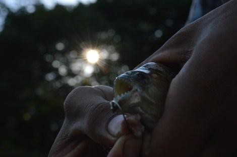 Pesca de pinhanha no Rio Solimões, 2014, por LP
