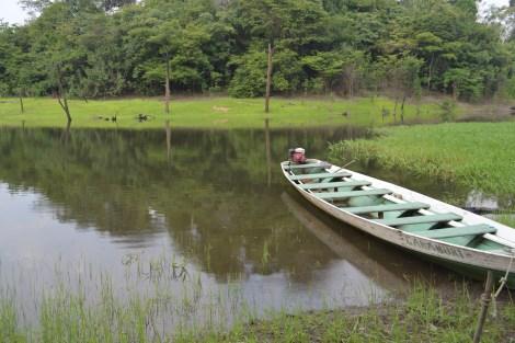 Canoa, principal transporte, Manaus, 2014, por LP