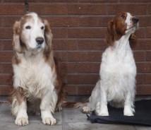 Otto och Polly