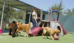 Dogs socializing at the dog boarding facility