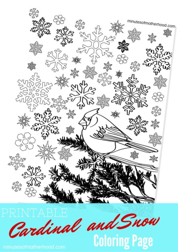 photograph about Free Printable Pictures of Cardinals titled Cardinal in just The Snow Totally free Printable Grownup Coloring Site