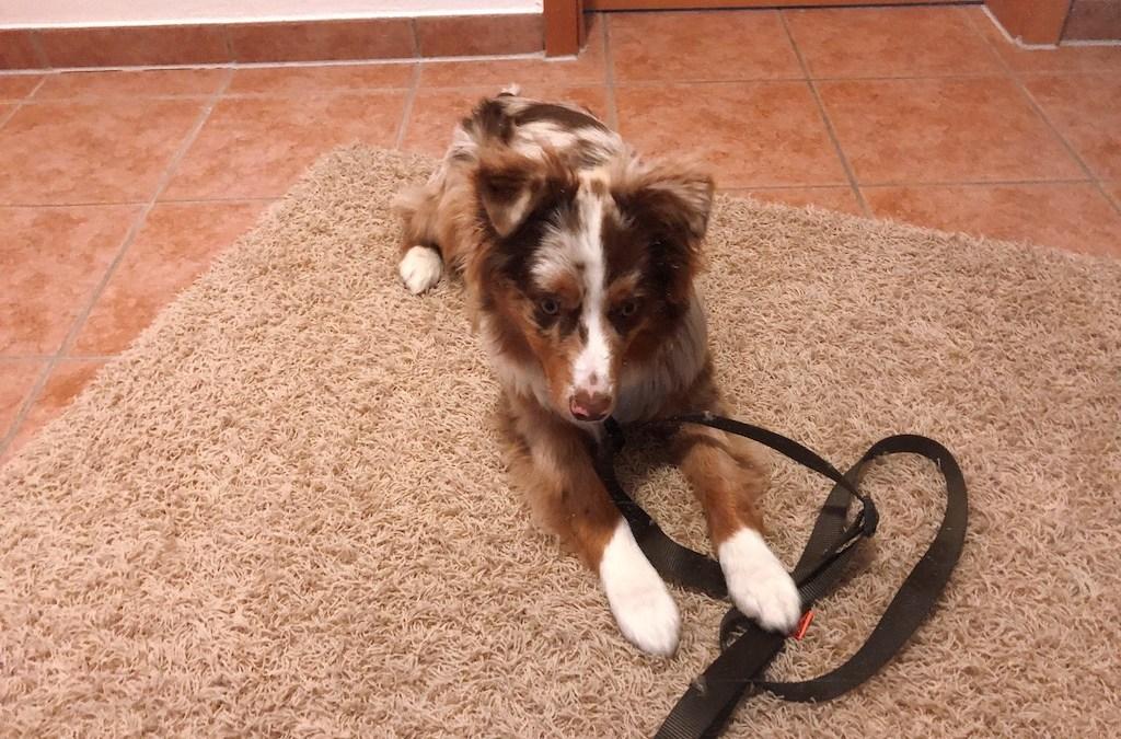 Hund 'Bleib' beibringen – egal was passiert