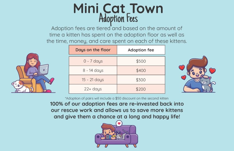 Infographic showing Mini Cat Town's adoption fees for kittens.
