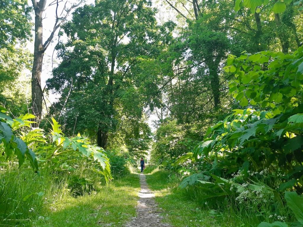 Almeerse bos