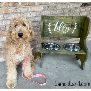 Lamgo Farms Weekly Update | Mini Goldendoodle Monthly | of Lamgo Farms