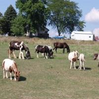 Pasture serenity 9-11-11