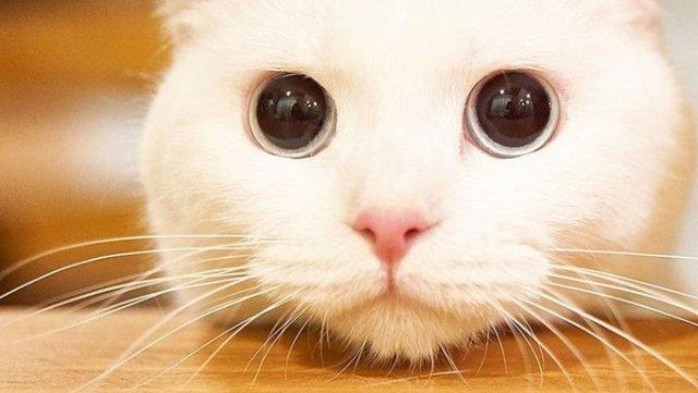 meow the secret boy kore