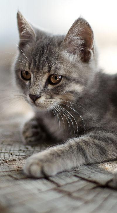 Voraussetzungen einer Pflegestelle für Katzenbabys