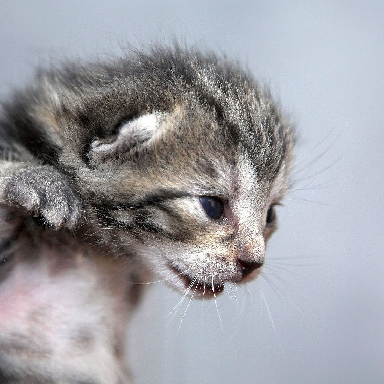 Pflegestelle für Katzenbabys werden - kann ich das auch?