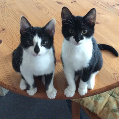 Altersbestimmung von Kätzchen