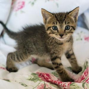 miniKatz.de - Tierschutz - Pflegestelle für Kitten - Aufzucht von Katzenbabys