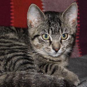 miniKatz - liebevolle Pflege für ausgesetzte und mutterlose Katzenbabys