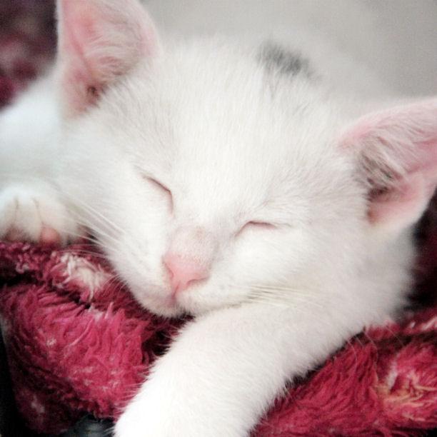 Eine Katze kommt ins Haus - welche Grundausstattung brauche ich?