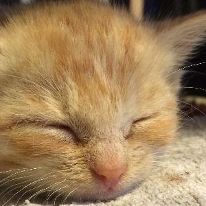 miniKatz - liebevolle Pflege für ausgesetzte und mutterlose Katzenbabys.