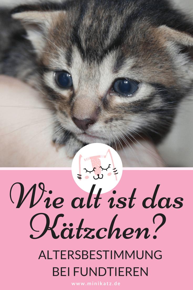 miniKatz - Altersbestimmung und Entwicklung von Kätzchen