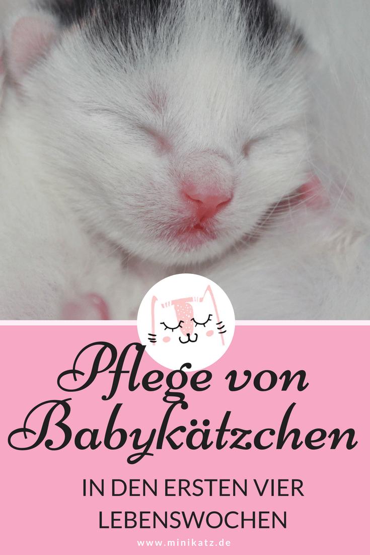 miniKatz - Pflege von Babykätzchen bis zum Alter von vier Wochen