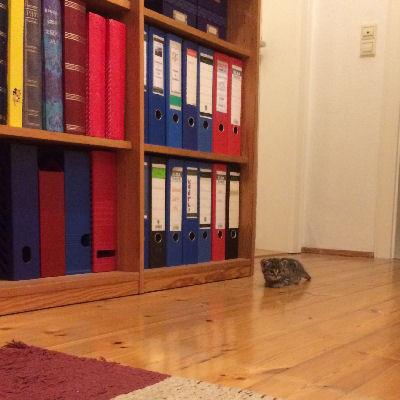 Kleine Babykatze will hoch hinaus