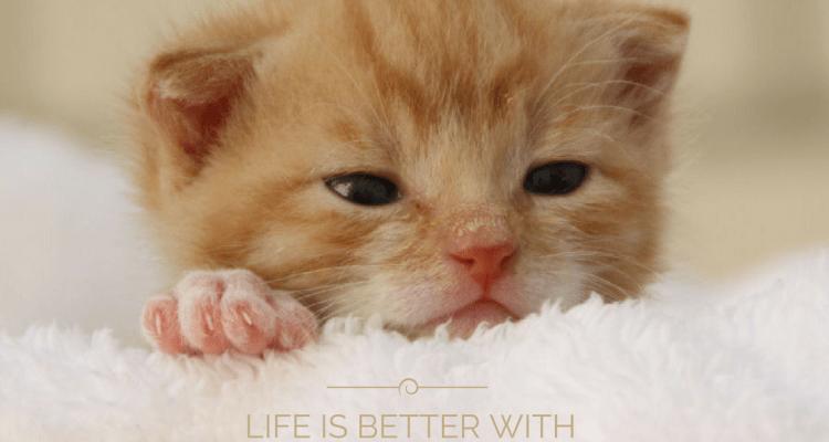 miniKatz - Pflegestelle für ausgesetzte und mutterlose Katzenbabys