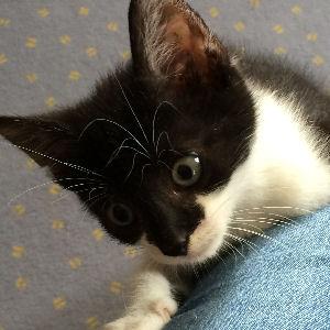 miniKatz - liebevolle Pflege von ausgesetzten und mutterlosen Katzenbabys.