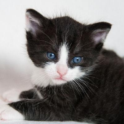 Altersbestimmung bei Kätzchen