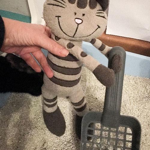 ehrenamtlicher Helfer auf Katzenpflegestelle