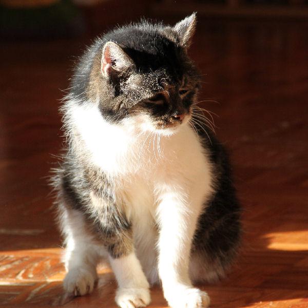 Katzen-Senioren brauchen Liebe!